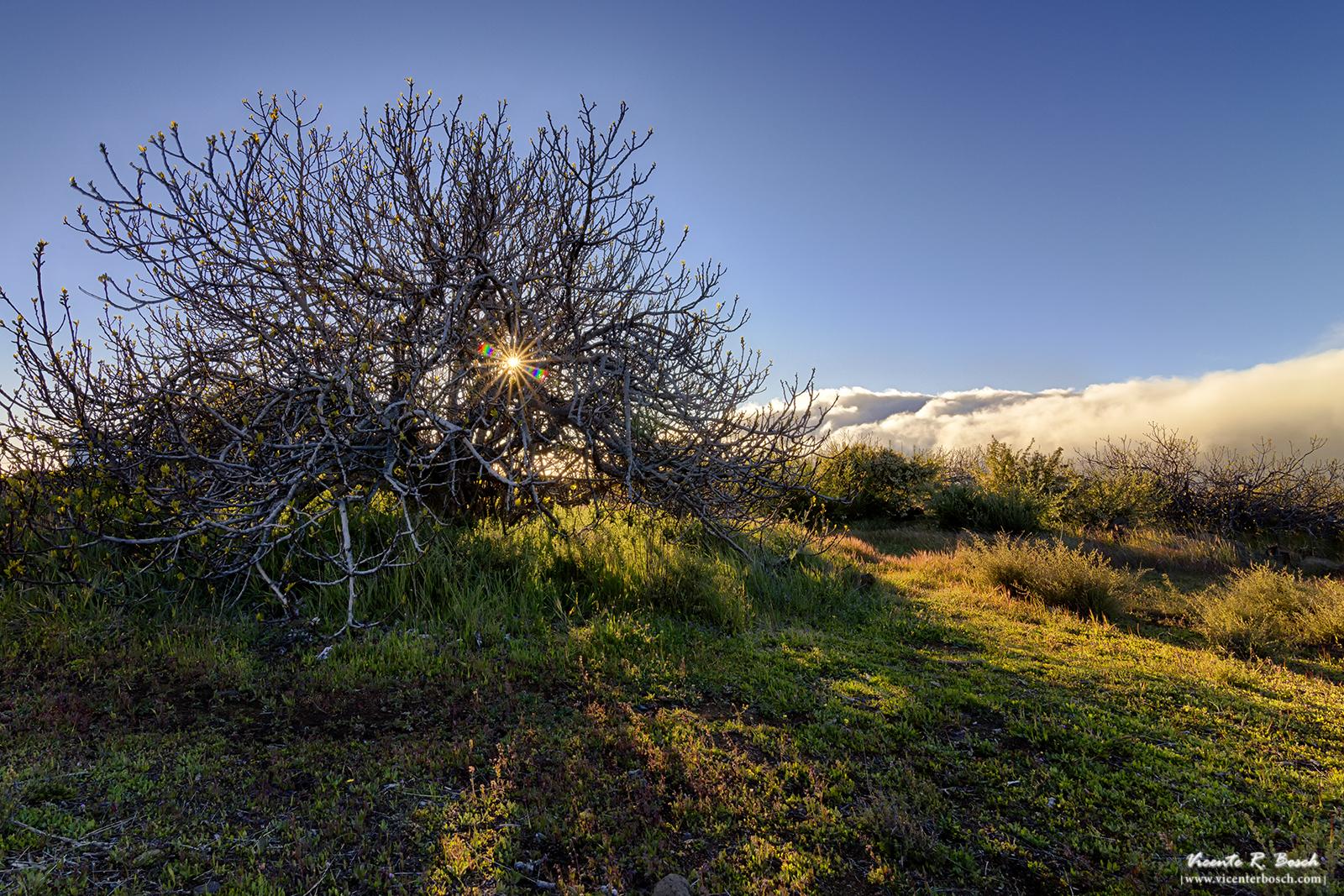 Atardecer en la higuera - Santiago del Teide - Valle de Arriba
