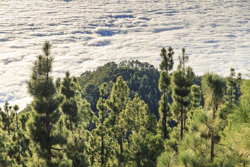 XIV curso de fotografía digital en Tenerife 9